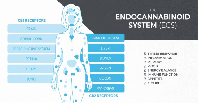 Your EndoCannaninoid System